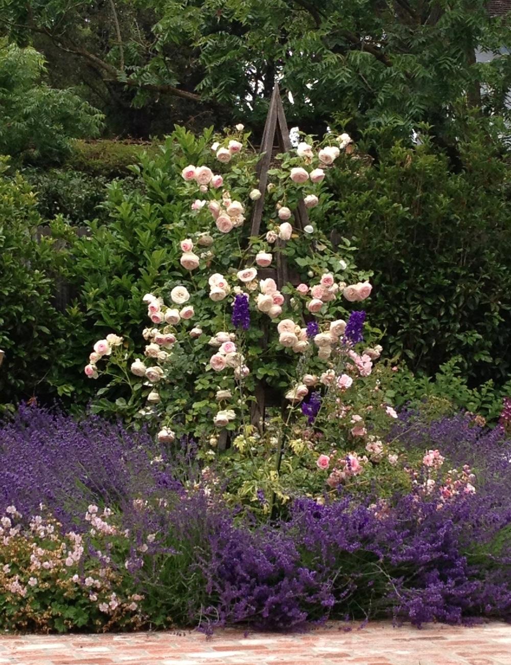 english garden  palo alto  california
