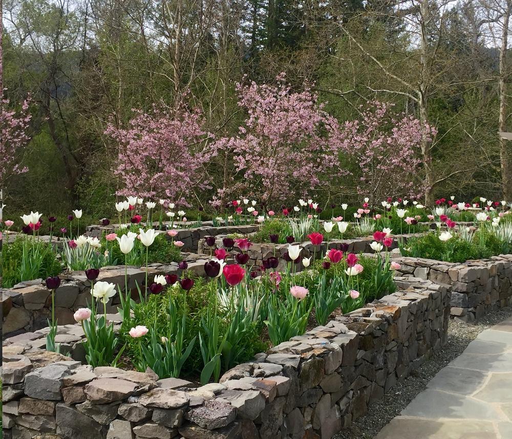 Woodland Garden, Portola Valley, California - marilee gaffney design